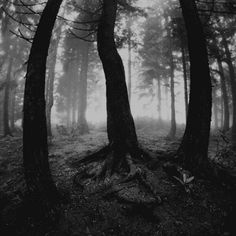 Celtic secrets lie lonely and forgotten in the dark shrouds of the shadowy forests...