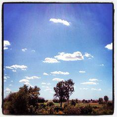 "@mauroparolo's photo: ""#ig #trees #phototag_it #iphone"""