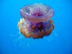 Jellyfish Movement UNDERWATER DVD VIDEO - Just jellyfish - YouTube