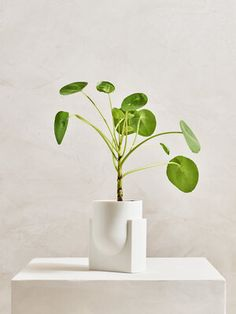 Set of 3 Ceramic Planters