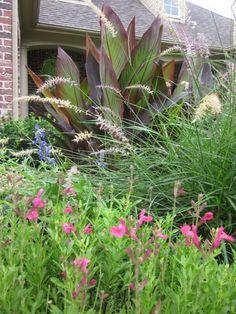 draws in butterfly texas gardening