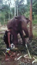 Pregnant With Elephant Memes. Updated daily, for more funny memes check our homepage. Gif Pictures, Funny Animal Pictures, Images Gif, Funny Animals, Funny Jokes, Hilarious, Gif Animé, Can't Stop Laughing, Comic