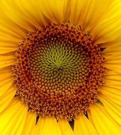 "Authors use symbolism to strengthen poems. A  poem by William Blakes : ""Ah Sunflower, weary of time, Who contest the steps of the sun; Seeking after that sweet golden clime Where the traveler's journey is done."" In this poem he uses the sunflower to symbolize the desire for ever lasting life and human kind."