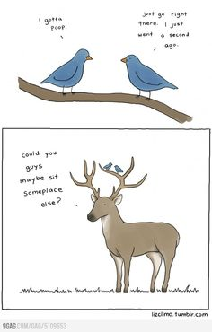 Silly birds. They should draw them above a car, that's their favorite place to sit.