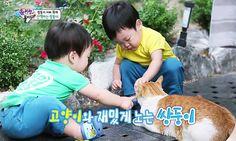 고양이와의 어울림이 예뻤던 둥이(Ep35) 새록새록 아련해지는 그때 #이서언#서언이#서언#seoeon #seoeonie #이서준#서준이#서준#seojun #seojunie by mozzijun