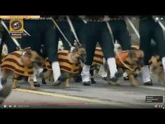 Собаки на параде | Немецкий боксер