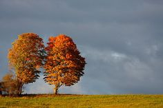http://upload.wikimedia.org/wikipedia/commons/thumb/7/7b/Trees_in_a_field,_fall_in_Canada.jpg/640px-Trees_in_a_field,_fall_in_Canada.jpg