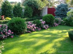 Image result for roses and evergreens