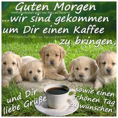 Good Day, Good Morning, Family Planning, You Are The Father, Animals And Pets, Labrador Retriever, Have Fun, Dogs, Pictures