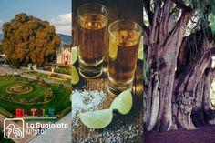 Esta comunidad no solo ofrece la bebidas de los dioses, es una parada obligada del turismo en Oaxaca