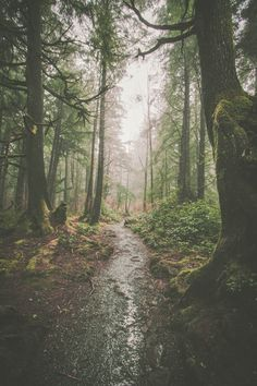 This is a gorgeous photo that makes me want to visit Forks, Washington immediately! Washington is one of the top 20 states to visit in Although Forks is in Twilight (and I'm not a Twilight fan), I still really want to visit after seeing this photo! Nature Aesthetic, Travel Aesthetic, Aesthetic Women, Night Aesthetic, Aesthetic Clothes, Adventure Aesthetic, Twilight Pictures, Nature Pictures, Aesthetic Pictures