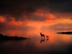 """""""Deer at Sunset""""  by Jenny Woodward."""