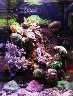 22 best pico reef images office lamp desk lamp aquarium