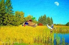 Bird Art Print Mallard Ducks Flying Marsh by FineArtography