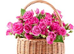 Pink roses in the basket.
