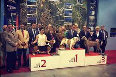 Exposição Canina com uma das maiores participações | Portal Elvasnews