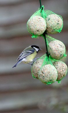 bird feeding ~ this is the method  at my house that attracts the most varieties, tallow and bird seed mix (some plain tallow) in netting.