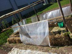weitere Pflänzchen und ein Dach für die Tomaten