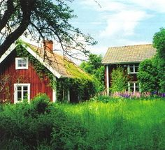 OMG this LOOKS LIKE MY MEM AND PEP's farmhouse and barn, as if it were abandoned and overgrown!!!!!!!!!! So beautiful....