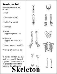 Human Anatomy: Liver   Anatomie des menschen, Körpersysteme und 5 ...