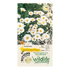 Suttons Wildlife Sanctuary Ox-Eye Daisy Seeds | Departments | DIY at B&Q