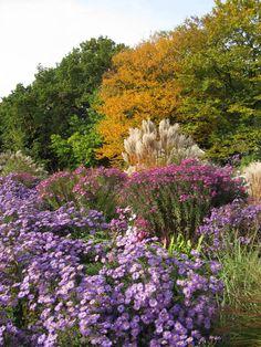 Herbstliches Blütenmeer durch Astern | Kleingärten, Schrebergarten und Garten-Tipps