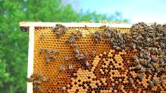 A Bugophobe's Guide to Beekeeping : When her curiosity and concern about Colony Collapse Disorder reached a peak, this writer put her deep, personal fear of bees aside. Sort of. .