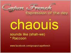 Cajun French - Raccoon