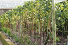 Make Planting Fruit your New Year's Resolution - Pumpkin Beth Hedging Plants, Fruit Plants, Edible Garden, Types Of Food, Sustainable Living, Hedges, Trees To Plant, Sustainability, Planting