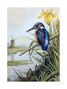 Kingfisher with Flag Iris and Windmill Giclee Print by Carl Donner at Art.com