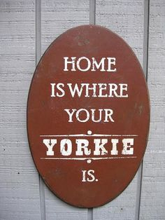 Home is where your Yorkie is