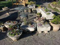 hypertufas and sedums from Rockwall gardens