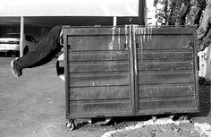 Tips for Mastering the Fine Art of Dumpster Diving