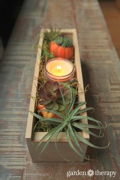 Decorate Your Fall Table with Succulents, Air Plants, and Pumpkins Wood Box Thanksgiving Airplant an Succulent Centerpieces, Succulent Arrangements, Table Centerpieces, Succulents, Table Decorations, Centerpiece Ideas, Diy Place Settings, Suculentas Diy, Seasoned Wood