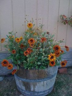 Wildflowers Photography | Honorable Mention - Fall in a Barrel