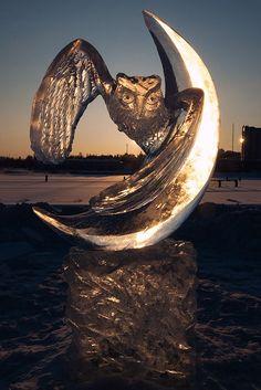 Ice Owl. Joensuu, Finland