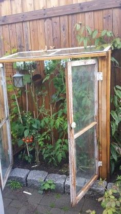 My homemade greenhouse. 3 old windows were all I had on hand. - My homemade greenhouse. 3 old windows were all I had on hand. Small Greenhouse, Greenhouse Plans, Greenhouse Gardening, Homemade Greenhouse, Old Windows, House Windows, Garden Trellis, Garden Structures, Raised Garden Beds