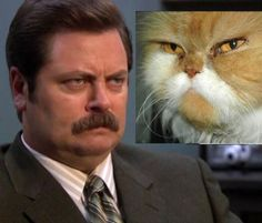 Julie Stafford, I'm so excited for tomorrow night! I can't wait to see, Mr. Swanson! I'm loving this cat lookalike too!