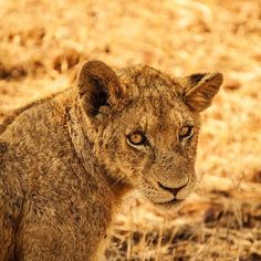 A perfectly planned safari can capture all the allure Africa has to offer. Whether you find yourself in Chobe National Park in Botswana, the Masai Mara National Reserve of Kenya, or spotting the big five with ease in the Kruger National Park of South Africa, we guarantee there is something incredible to see for all. Contact one of our FROSCH Africa specialists today to learn more!  @_sosuchjelly