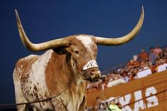 Don't Mess with Texas! Don't Mess with Longhorns !! Hook'em !!