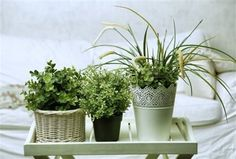 Adding house plants is a simple way to bring the outdoors in and increase feelings of calm and relaxation, perfect for the bedroom. Choose plants with air purifying qualities that can aid better sleep including Pothos, Peace Lily and Aloe Vera. Do It Yourself Furniture, Make It Yourself, Suculentas Interior, Decoration Plante, Peace Lily, Spider Plants, Snake Plant, Aquaponics, Live Long