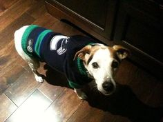 Thanks to Twitter follower @7Nuckster7 for sharing this hockey dog! #hockeypets