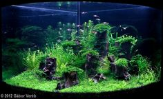 aquascape 5 gallon tank - Google Search
