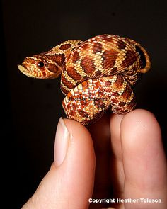 Zot in a Knot by *HeatherTelesca on deviantART, Hognose Snake. I hope you've all marked your calendars for World Snake Day, this July 16th!