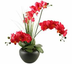 Beauty Orchids in Round Ceramic Planter | 55DowningStreet.com