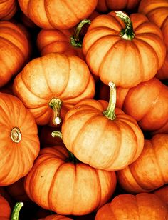 Pumpkin season.