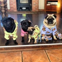 Can you stand the Pug pajama party? Look at the baby!