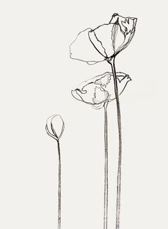 Walter Schupfer Management - Illustrators : Bernadette Pascua