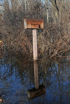Mail Box In A Swamp