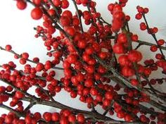 Red Christmas Berry Stems